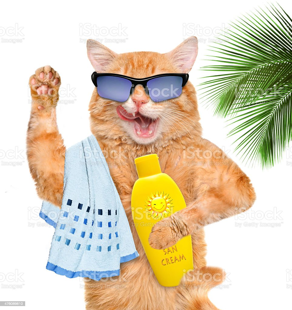 Cat with sunblock. Isolated on white. stock photo