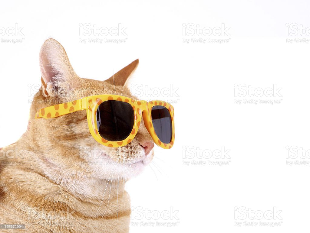 Cat with Sunglasses stock photo