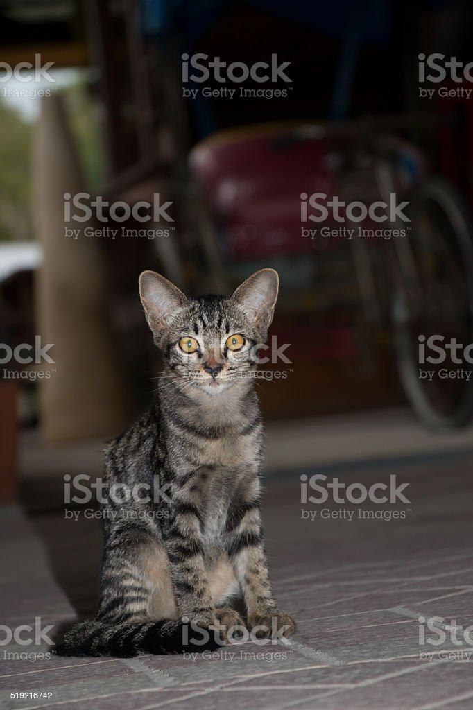 Cat with tiger pattern stock photo