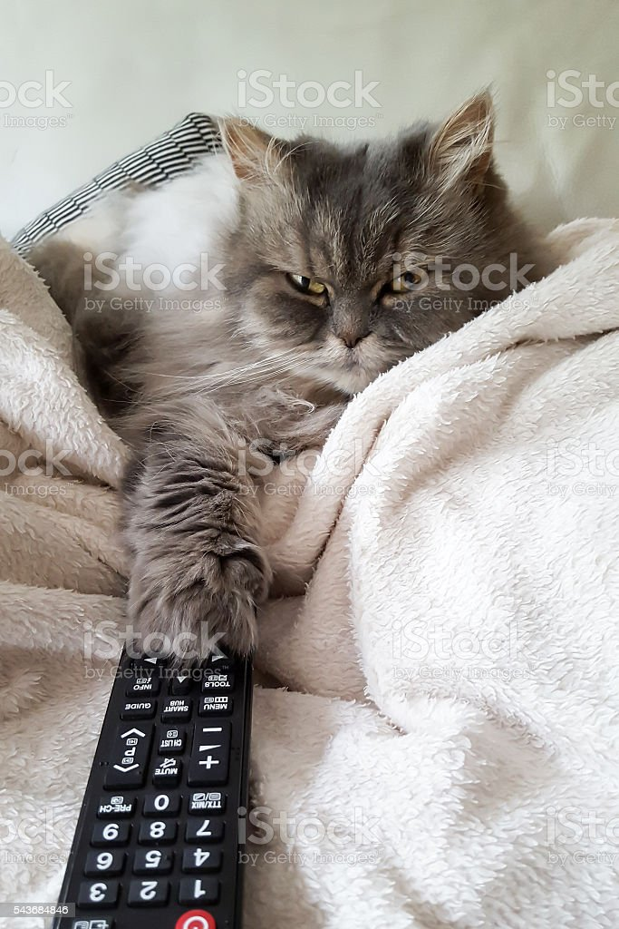 cat with TV remote stock photo