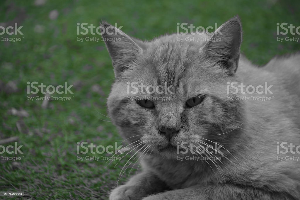 Cat without colors stock photo