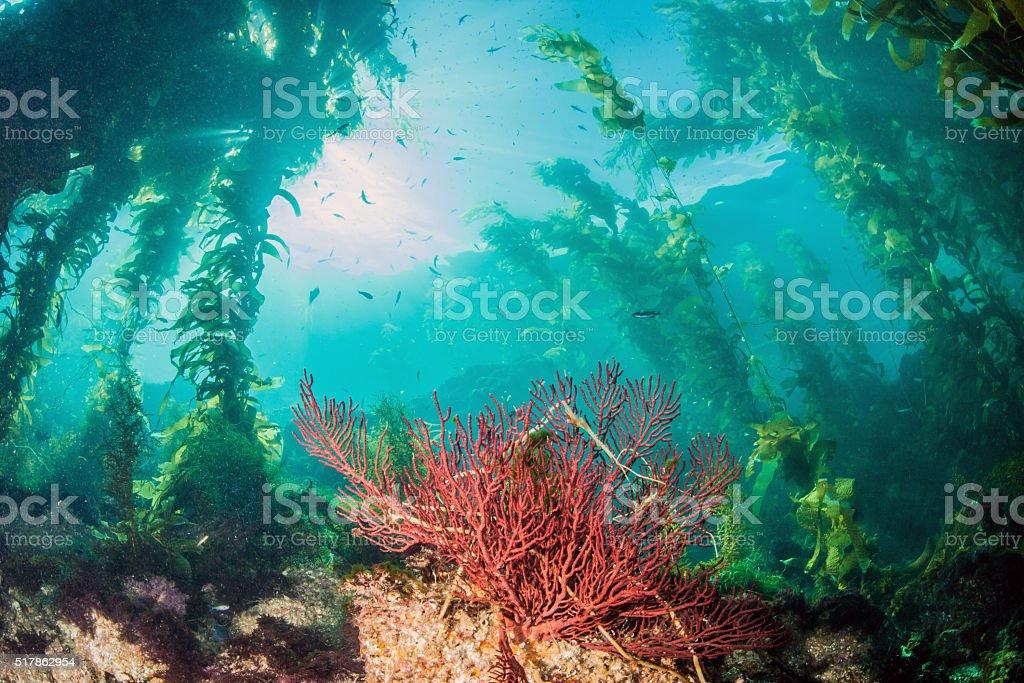 Catalina Island Scuba diving stock photo