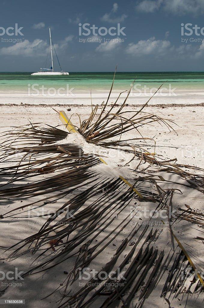 Catamaran and palm leaf at Cayo Blanco, Cuba royalty-free stock photo