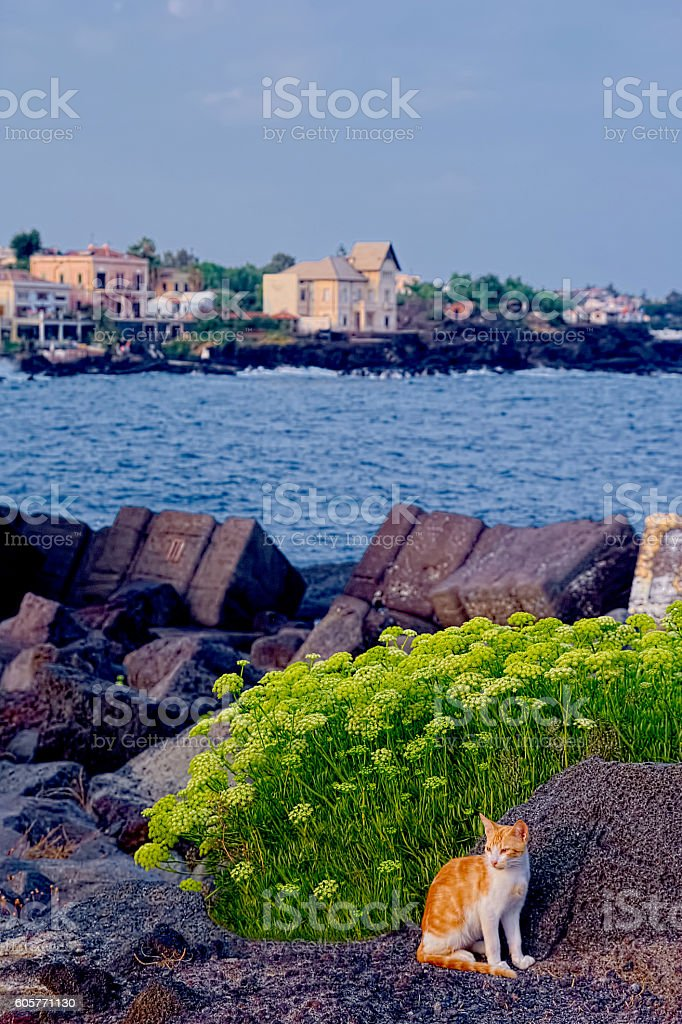 Catania sea View with a cat stock photo