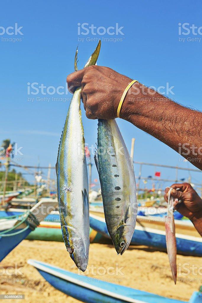 Catch of fish stock photo