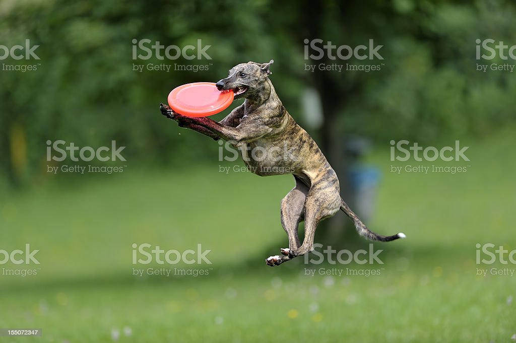 Catch! royalty-free stock photo