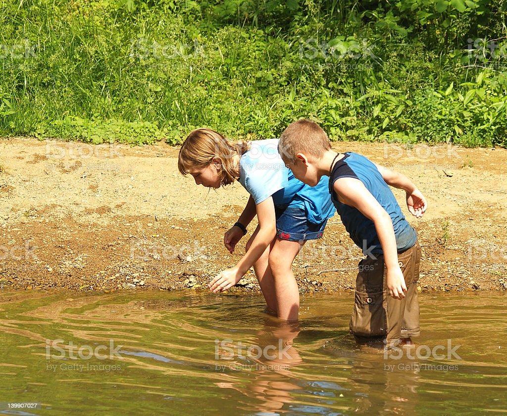 Catchin Tadpoles royalty-free stock photo