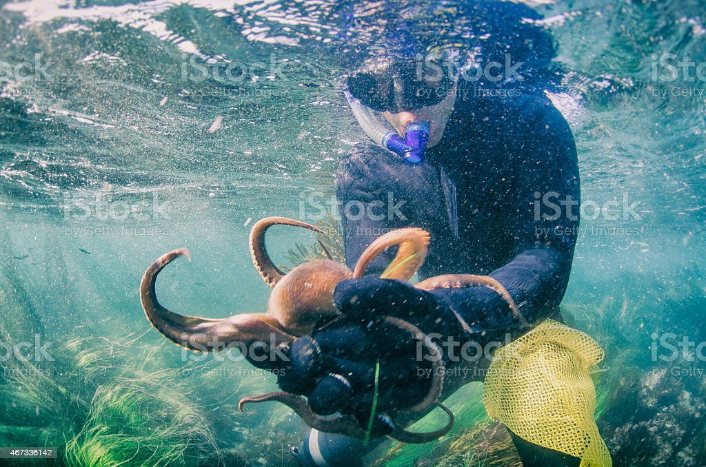 Catching an octopus stock photo