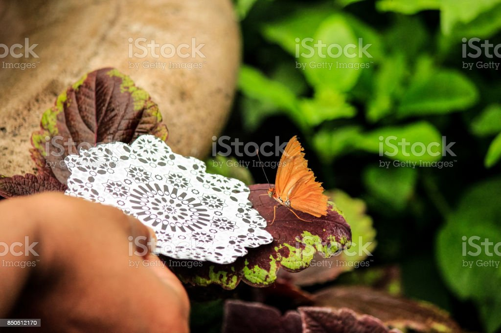 Catching butterfly with quilling paper stock photo