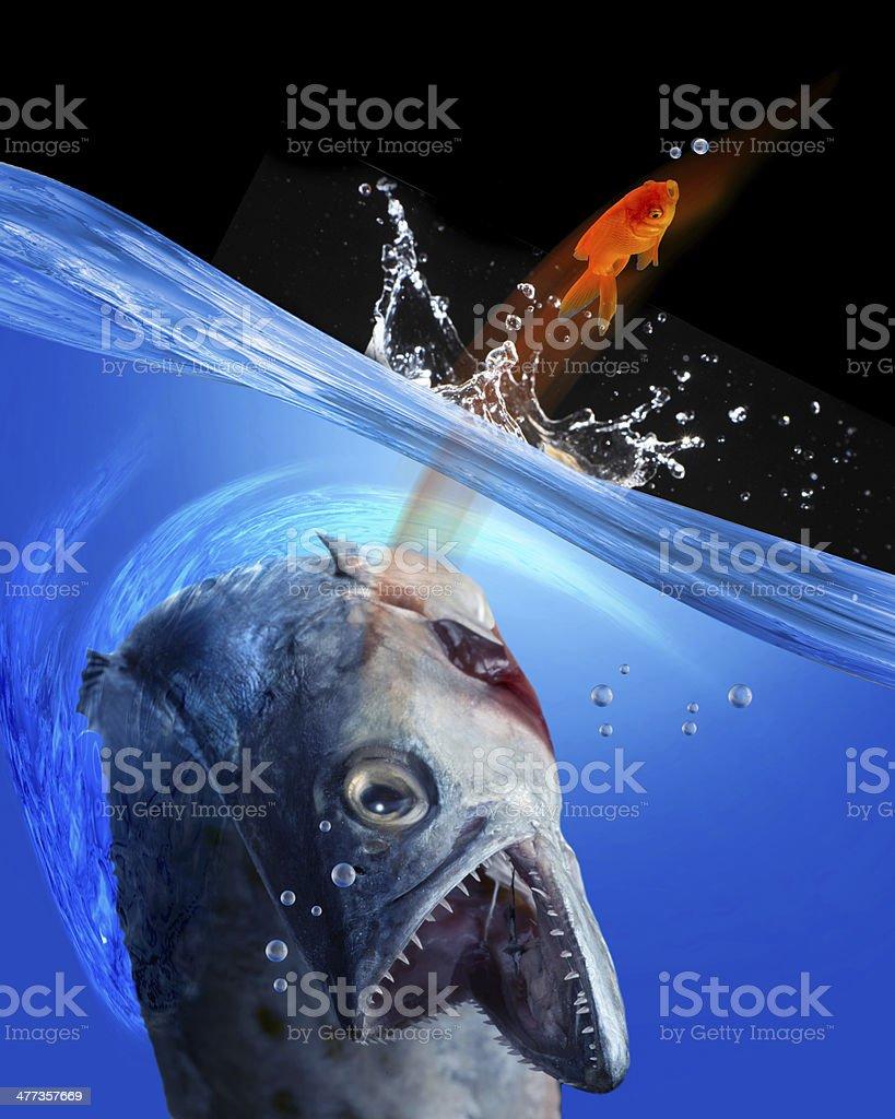 Catching Fish. stock photo