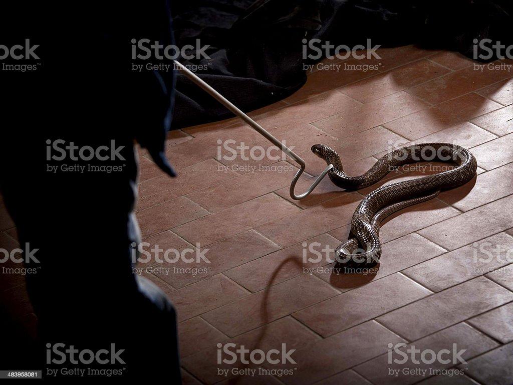Catching snake stock photo
