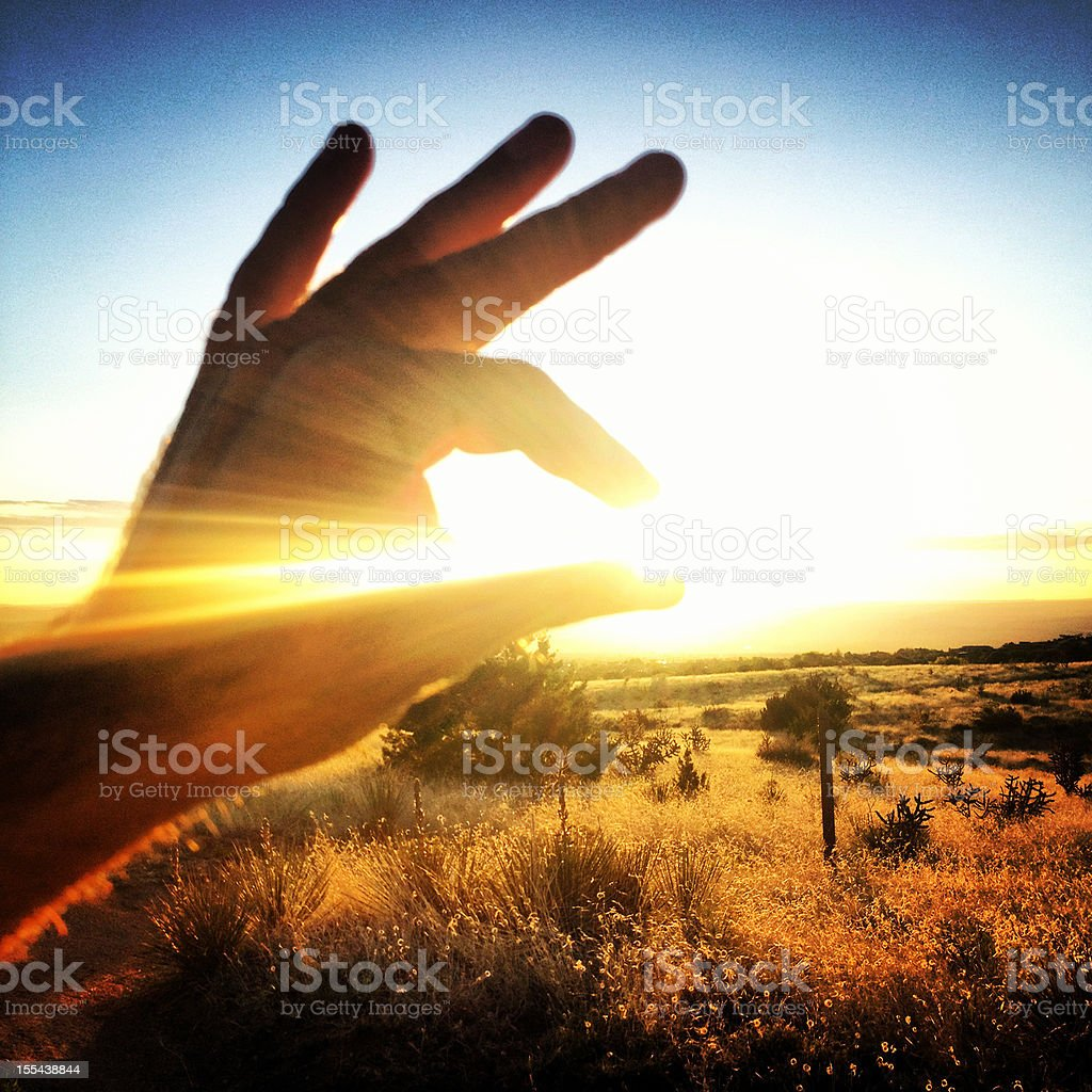 catching sunlight royalty-free stock photo