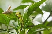 catepillar on leaf