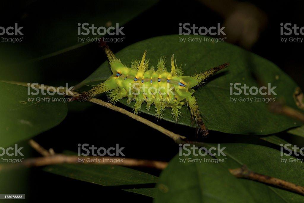 caterpilla on left stock photo