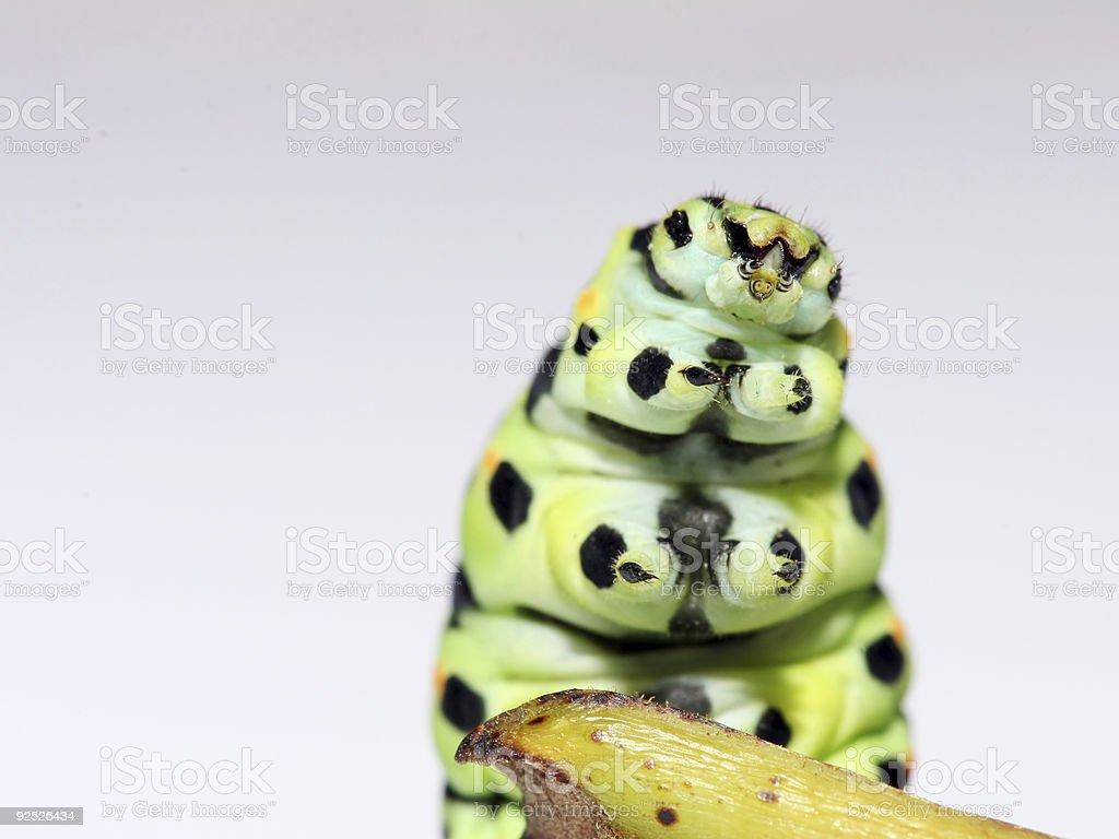 Caterpillar 5 stock photo