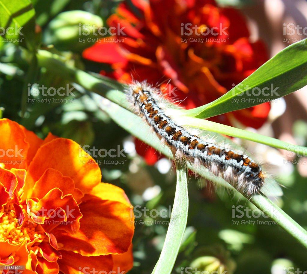 Caterpillar among Flowers stock photo