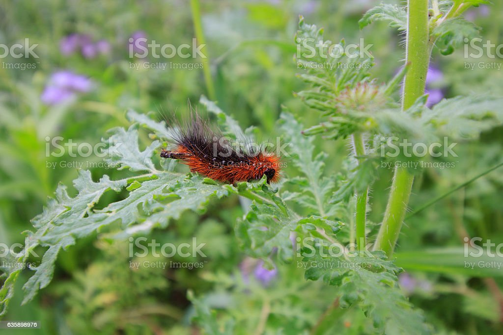 Caterpillar in green leaves stock photo