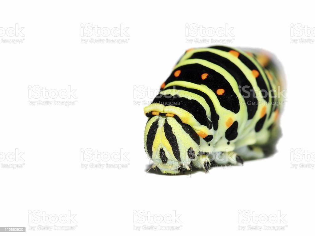 Caterpillar isolated on (true) white background 2 stock photo