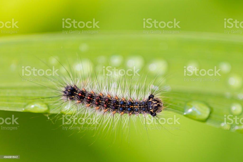 Caterpillar Macro Photograph stock photo