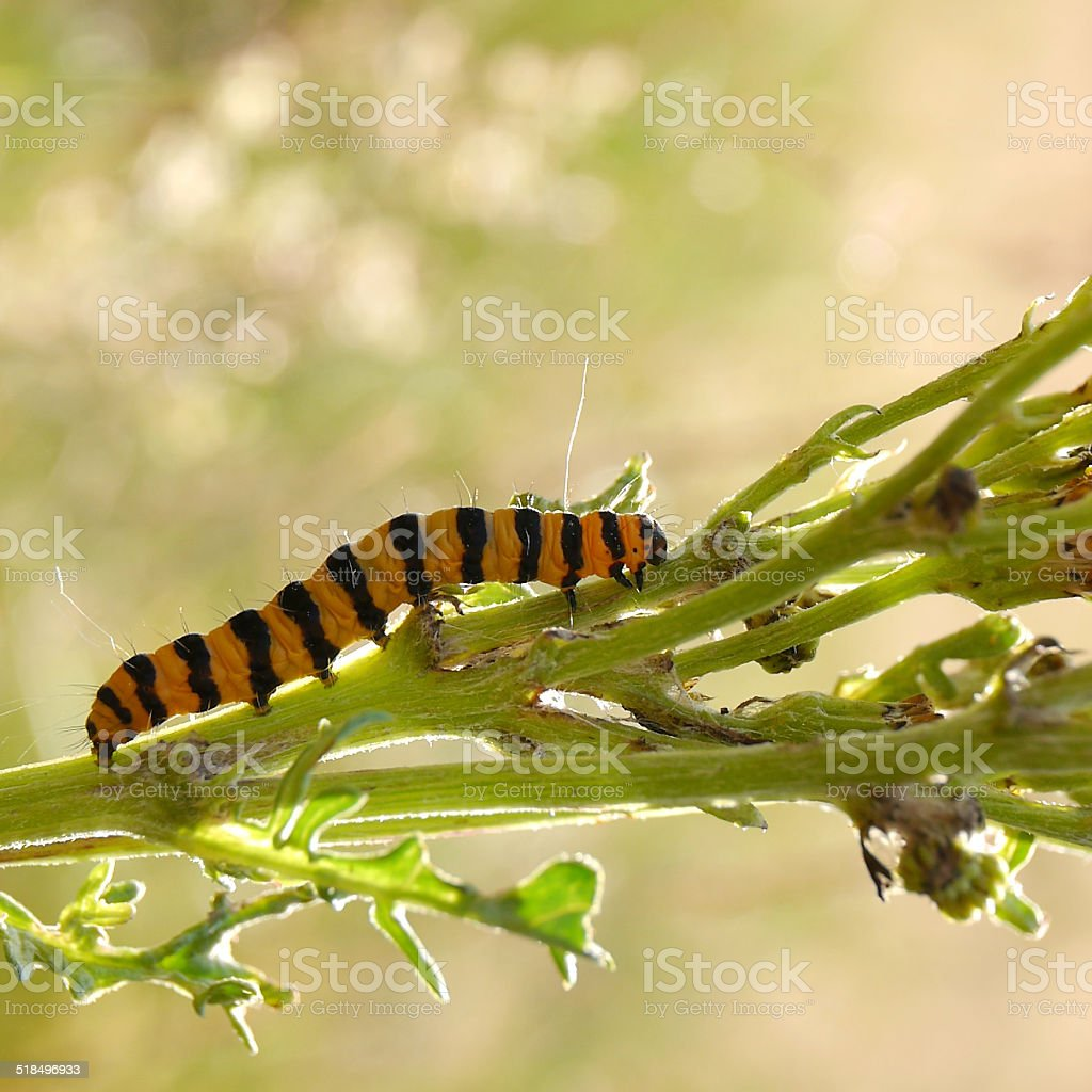 caterpillar on a plant royalty-free stock photo