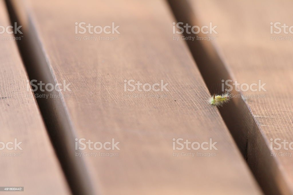 caterpillar on park bench stock photo