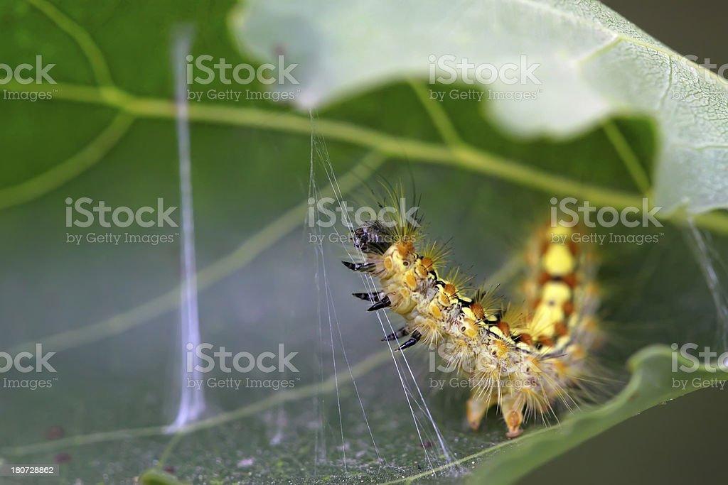 caterpillar on the plant stem royalty-free stock photo