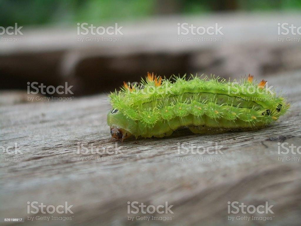 caterpillar stock photo