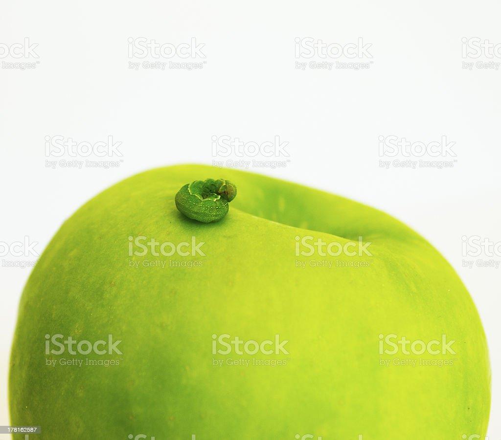 Caterpillar sleeping on an apple stock photo