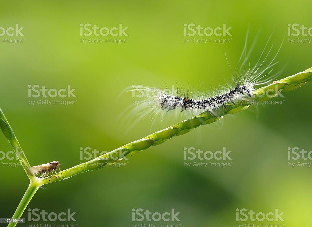 Caterpillar vs Fly stock photo
