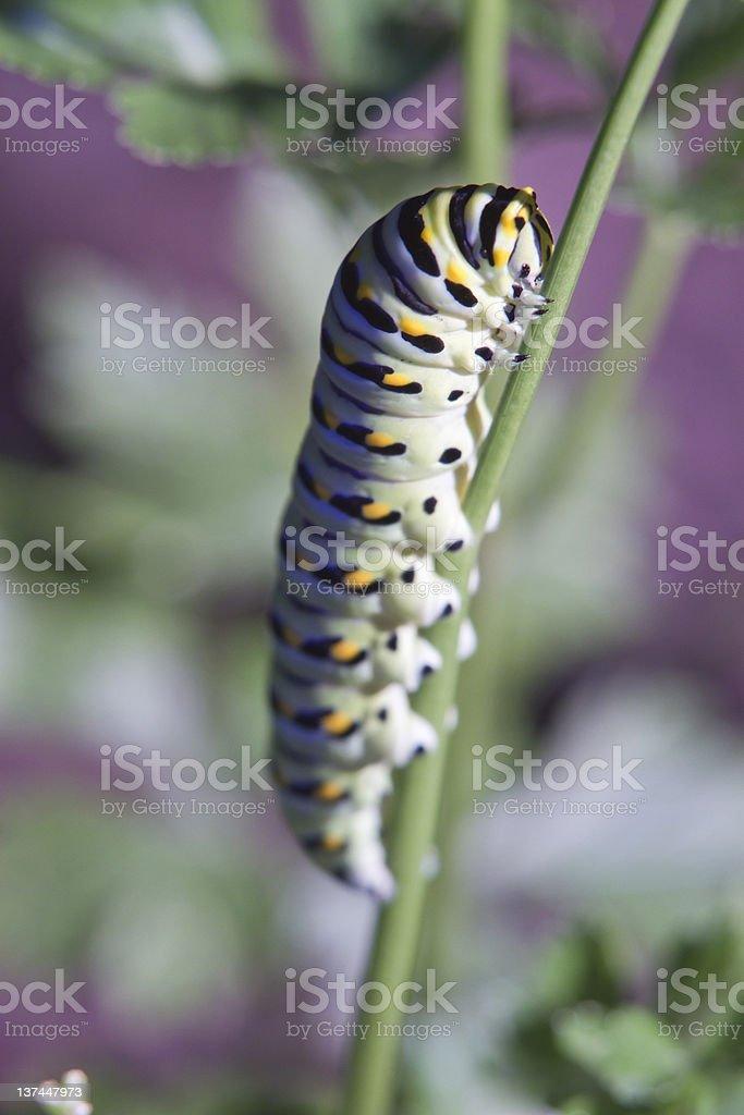 Caterpiller in Garden stock photo
