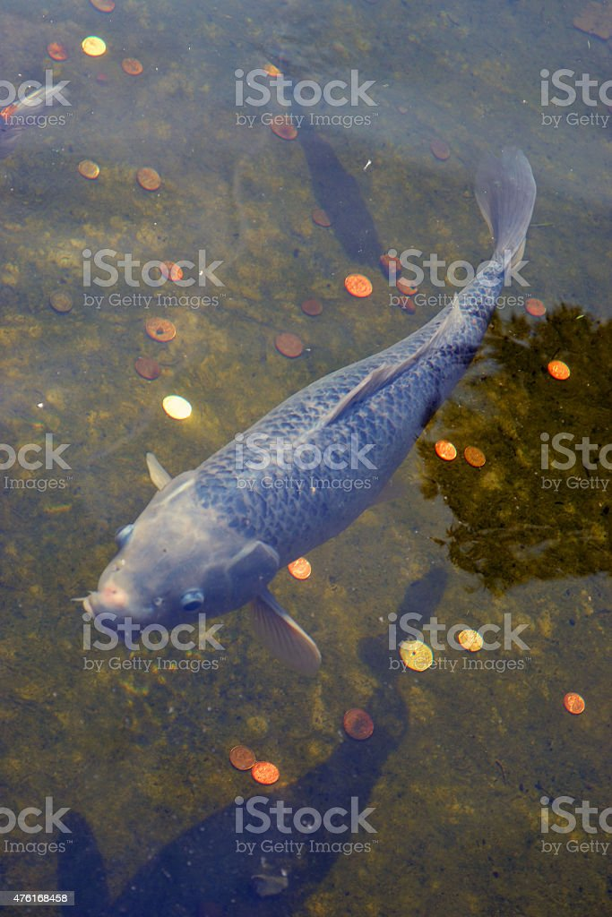 Catfish stock photo
