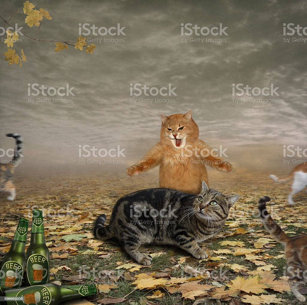 Cats and beer. stock photo