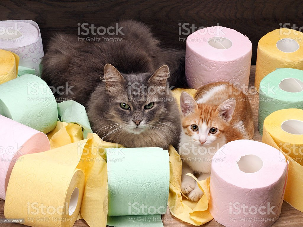 Cats and colored toilet paper stock photo