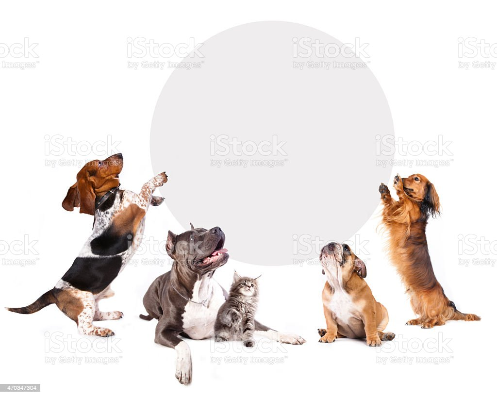 cats and dogs holding a cork banner stock photo