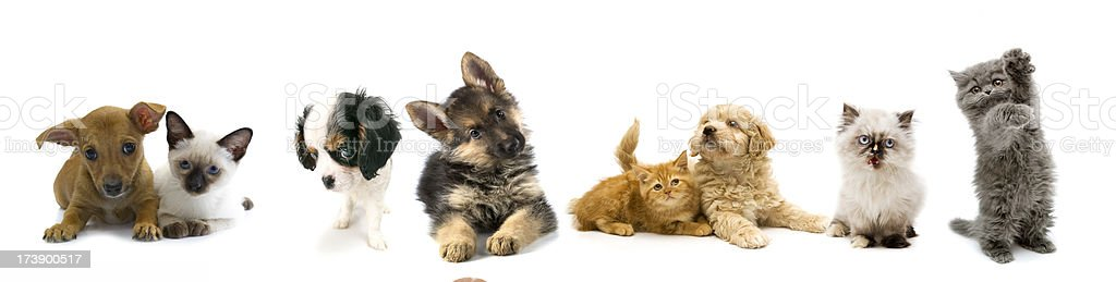 cats and dogs royalty-free stock photo