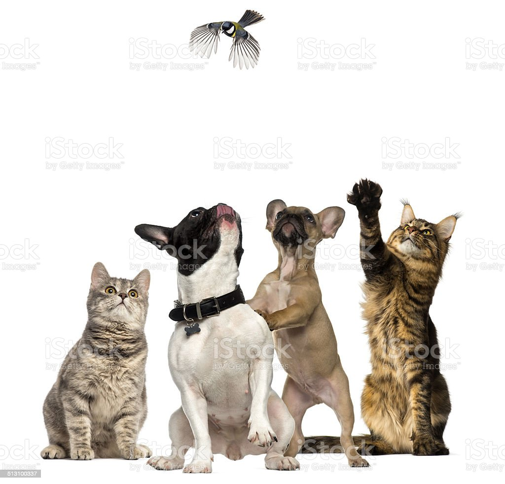 Cats and Dogs trying to catch a bird flying stock photo
