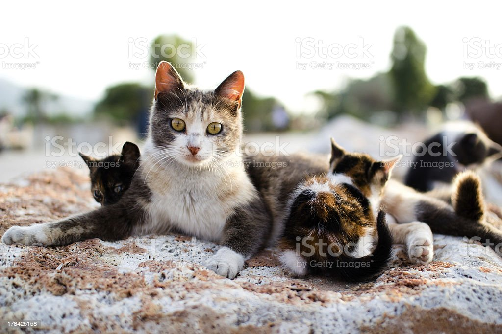 Cats and kittens stock photo
