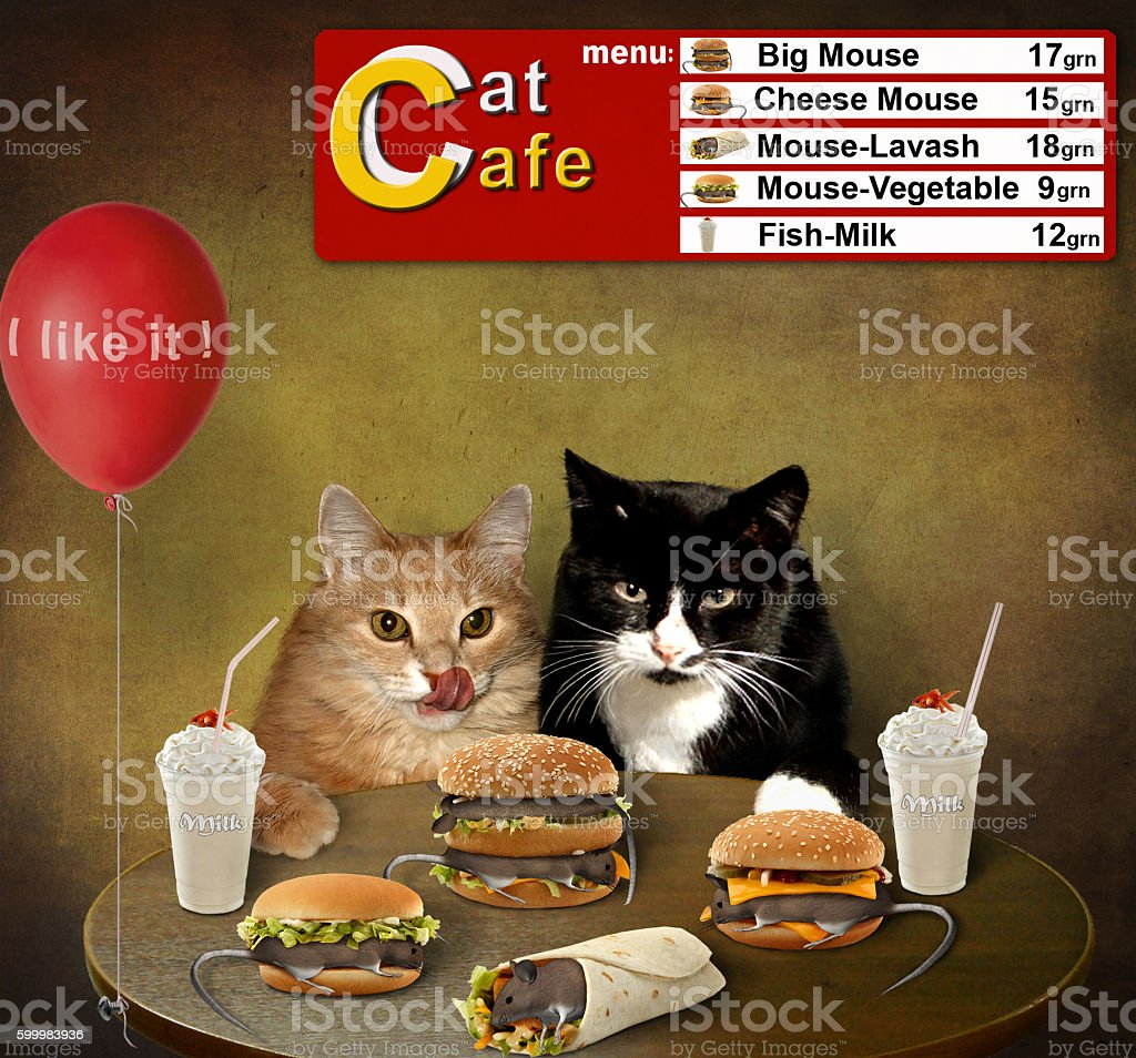 Cats are in a cafe. stock photo