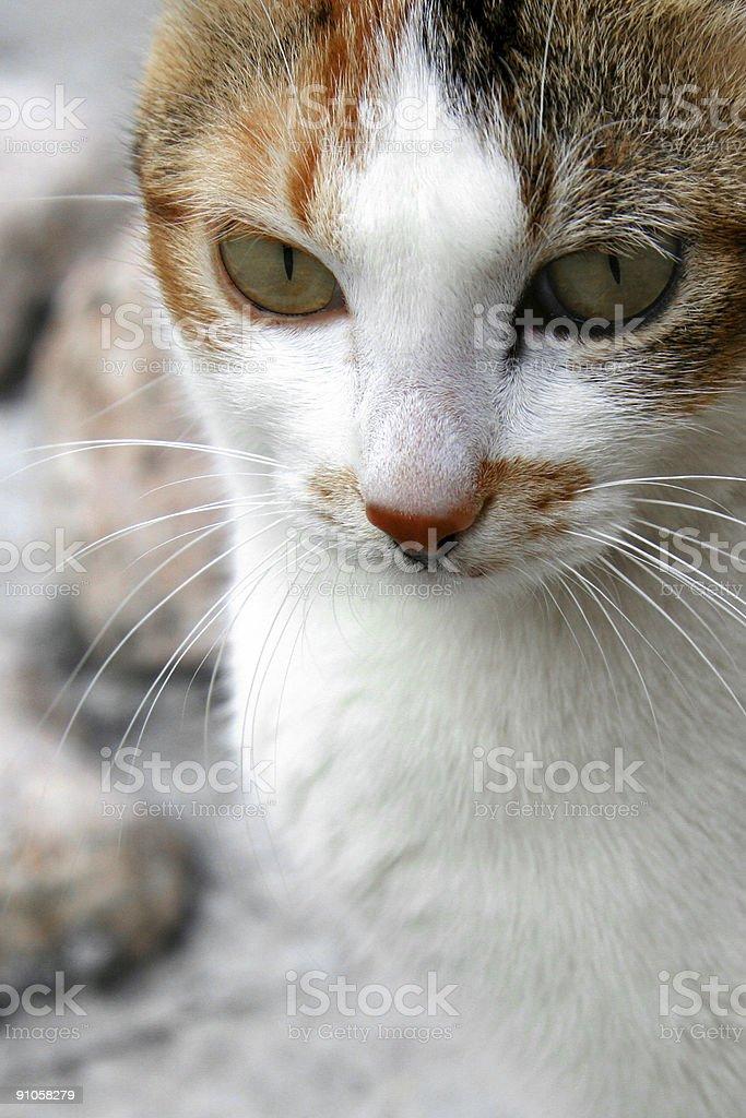 Cat'primer plano foto de stock libre de derechos