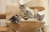 cats cozy place