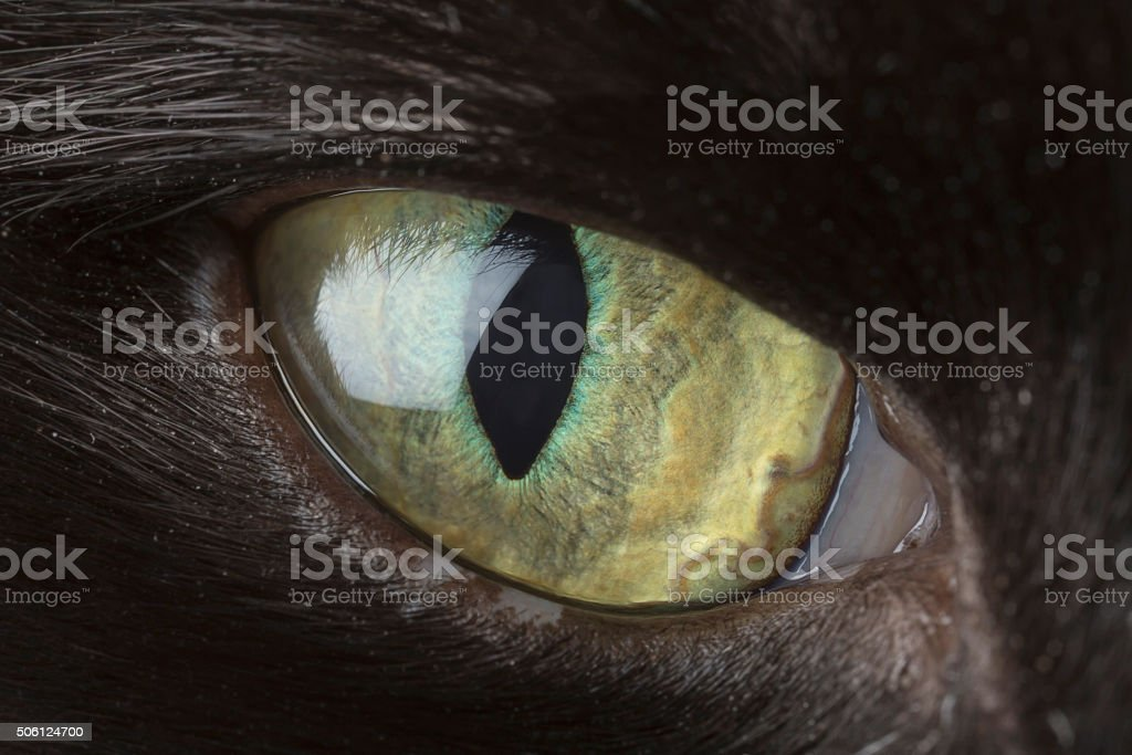 Cats eye close-up stock photo