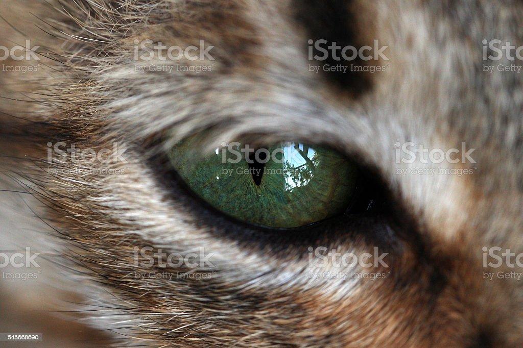 Cats eye close-up stock photo