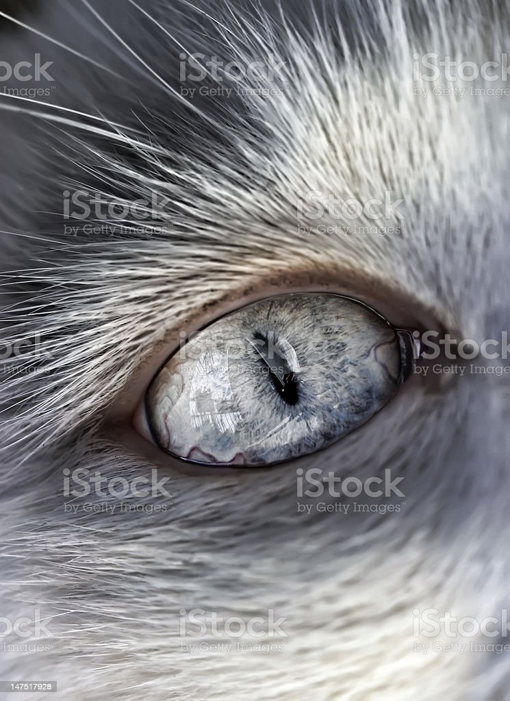 Cat's eye royalty-free stock photo