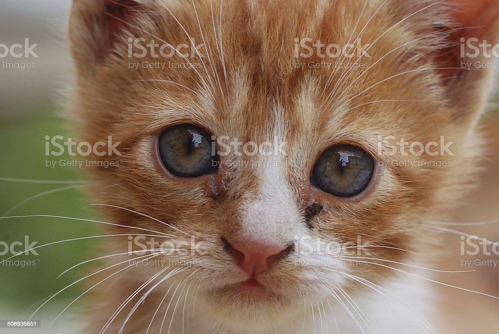 Cat's face stock photo