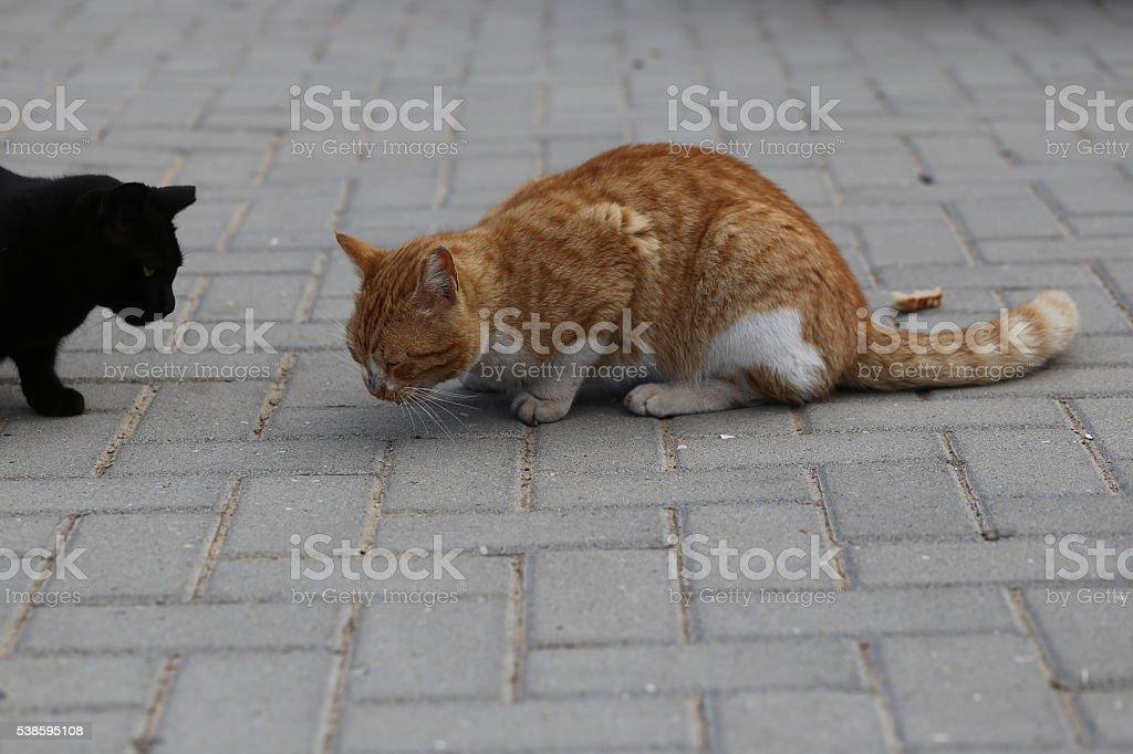 Cats Gathers Near Food stock photo