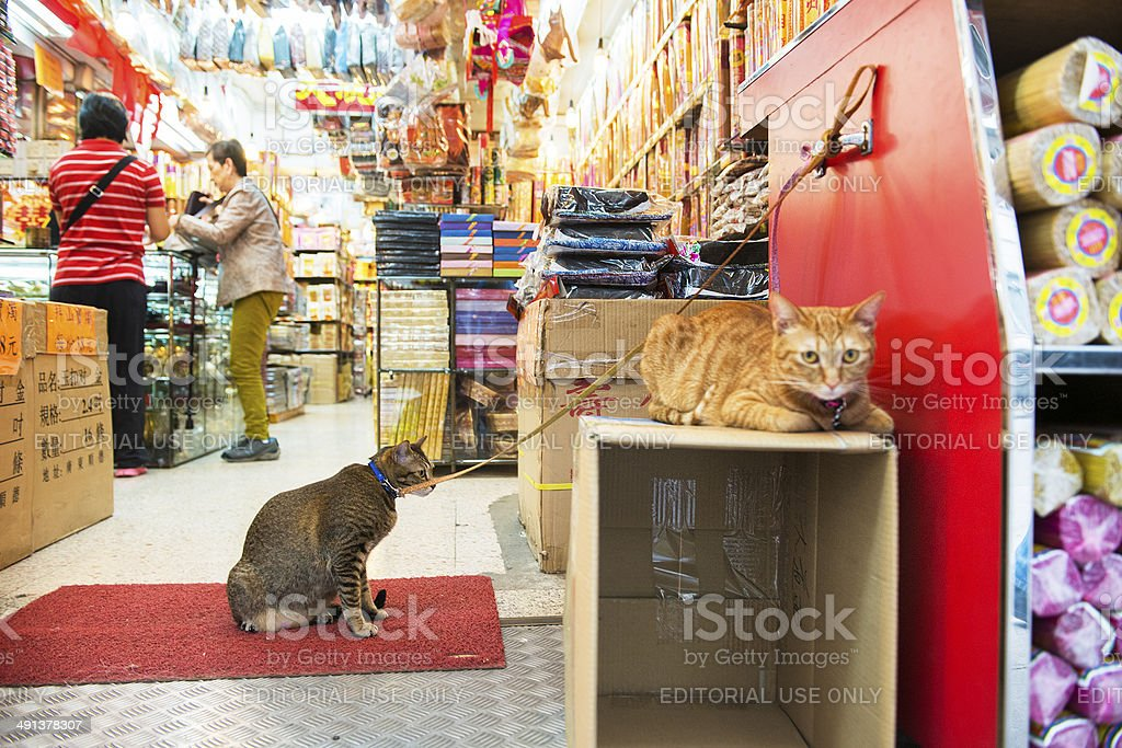 Cats Guard Store Entrance in Hong Kong stock photo