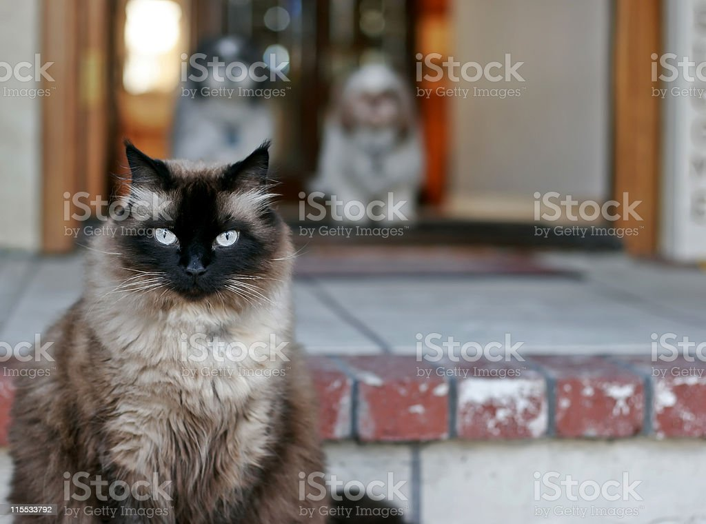 Cat's House royalty-free stock photo