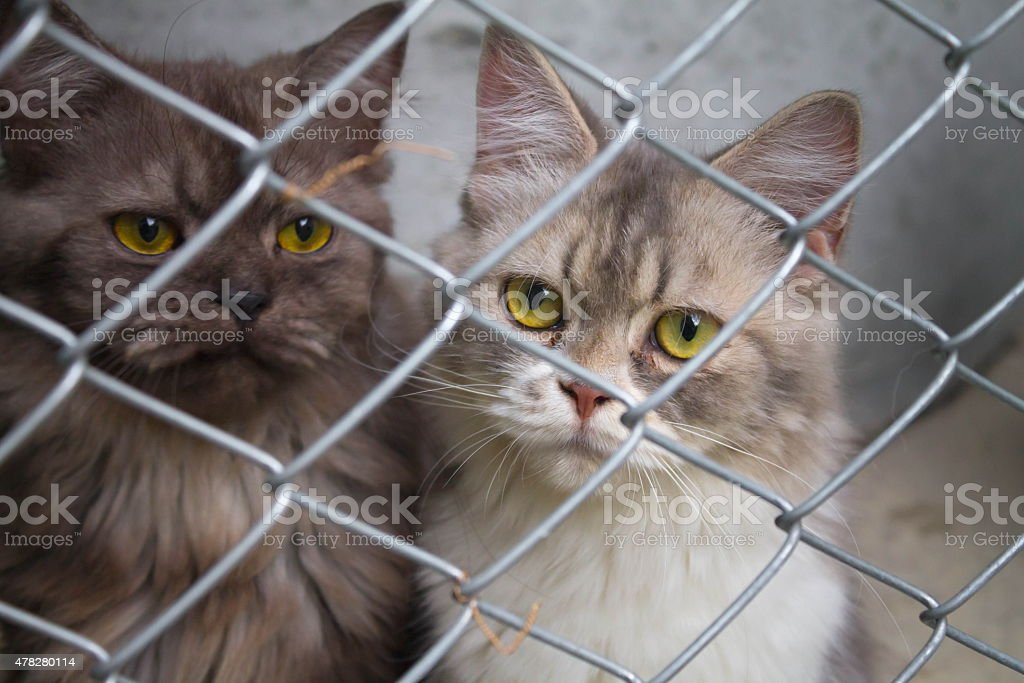 cats in a cage stock photo