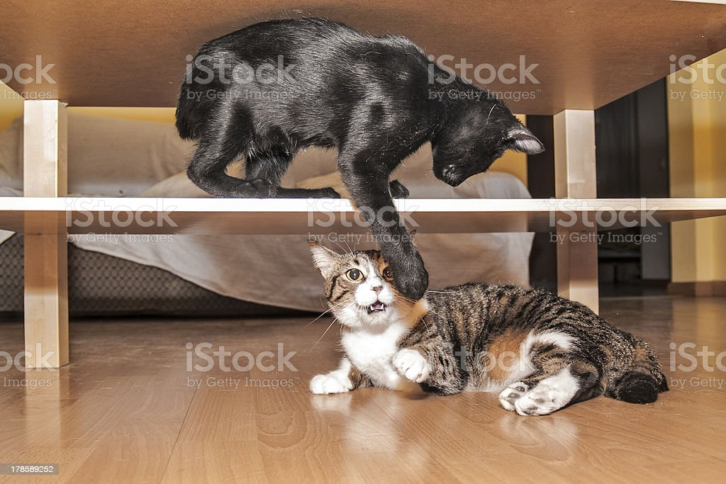 Cats in a struggle stock photo