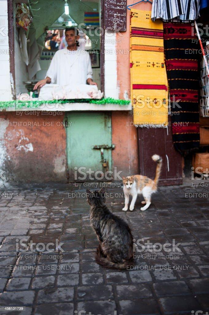 Cats in Souk Smarine, Marrakesh royalty-free stock photo